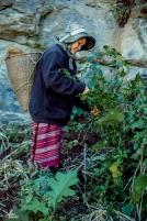 chiang-mai-pgakenyaw-188