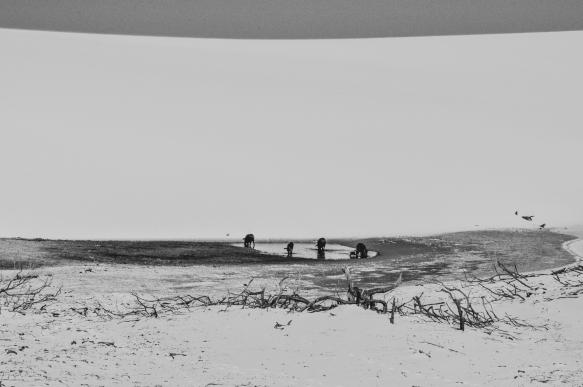 NORDESTE-2012-75