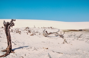 Dry Season / Seca