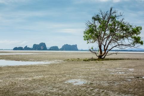 Dry-Tides-Koh-Libong-87