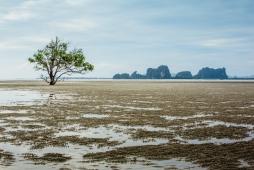 Dry-Tides-Koh-Libong-90